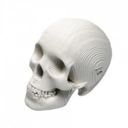 CARDBOARD - Micro VINCE Cardboard Human Skull WHITE
