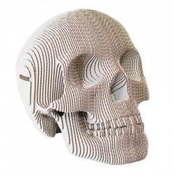 CARDBOARD - VINCE Cardboard Human Skull